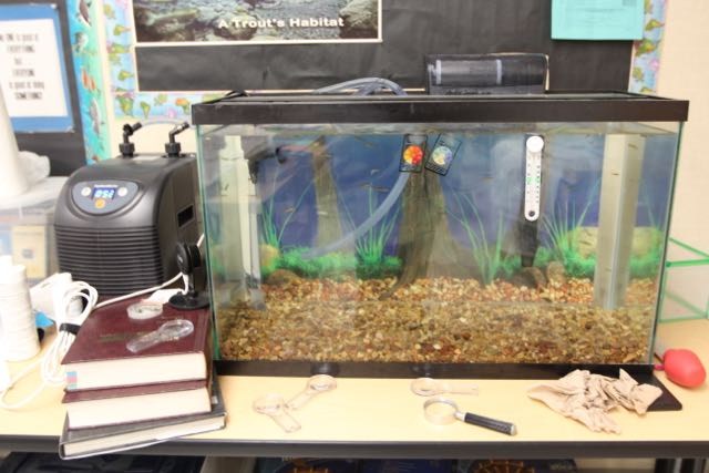 """<a href=""""https://rioschools.org/projects/trout-in-the-classroom/"""">Trout in the Classroom</a>"""